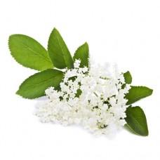 Vape-X Elderflower Flavour Concentrate 10ml